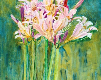 Watercolor painting, Botanical art, Surprise Lily, Professional Print with Archival Inks, Pink Summer Flower
