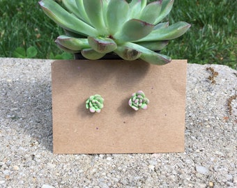 Succulent Earrings - Polymer Clay - Polymer Clay Succulent Earrings