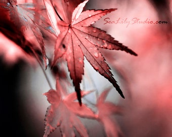 Japanese Maple II : surreal photo leaf macro photography abstract soft focus red black gray home decor 8x10 11x14 16x20 20x24 24x30
