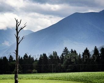 Mountain Landscape Photo Print. Lone Tree Photography Print. Landscape Print. Photo Print, Framed Print, or Canvas Print. Home Decor.