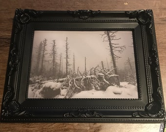 Winter Night-forest photography nature print Woods art Noirerora photography canvas tree Misty mystic Resin forest picture mural nature Frame