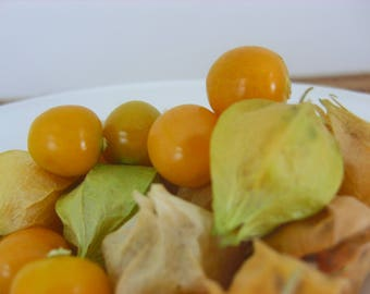Ground Cherry (50 thru 1/2oz seeds) Perfect Heirloom for Pies & Snacking! 270