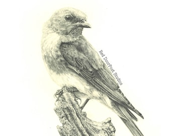 Limited Edition Fine Print of an Original Drawing of a Bluebird