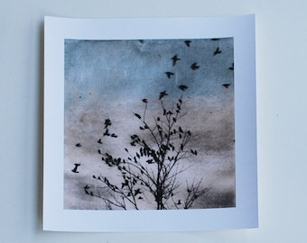 bird art, Archival reproduction, Doves Fly In, 88 editions art
