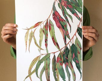 Gum tree print A3 - botanical watercolour print eucalyptus leaves - Australian native wall art - red green foliage