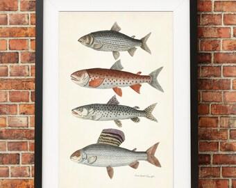 Fish Print, Trout Fish Art, Fish Poster, Art for Fisherman, Kitchen Art, Shore House Print, Trout Print