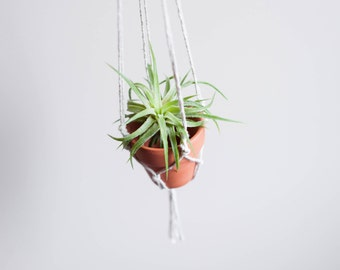 Hanging Macrame and Terra Cotta Planter