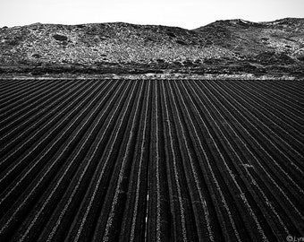 """Black and White Photography - farm field harvest landscape photography black picture large wall decor 16x20 16x24 farm wall print """"Infinity"""""""