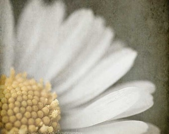 Photographie de Nature Marguerite - comme on le voit dans le 2013 Oscars GBK cadeau salon - art mural fleur gris jaune, chambre de bébé