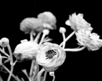 """Black And White Nature Photography, Ranunculus Flowers, Floral Wall Art, Dark Bold Decor, Black Wall Art, """"In Time"""""""