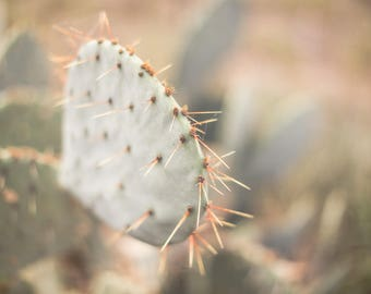 Prickly Pear Cactus #1