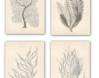 Sea fan Art, Seafan poster, Nautical Art, Seafan coral prints, modern vintage inspired  by coral, kelp, gorgonian, seaweed, seashore prints