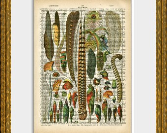 FRENCH FEATHERS and BIRDS dictionary art print - upcycled 1800's dictionary page with a lovely antique french feathers collage illustration