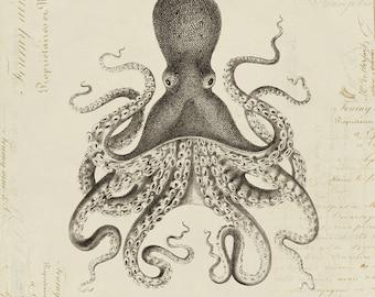 """Octopus """"Poulpe"""" on French Ephemera Print 8x10 P300"""