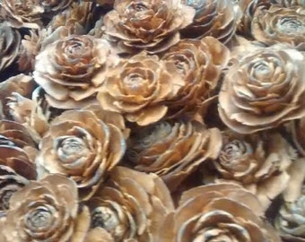 Cedar Rose Pinecones 10-100 (single heads)  - Perfect For Rustic Country Weddings
