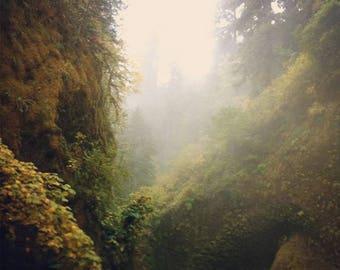 Foggy Forest Photo // Photo Art Print // mist, moss, oregon, fangorn, pacific northwest, columbia gorge, eagle creek, temperate rainforest