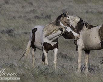 Painted Friends - Fine Art Wild Horse Photograph - Wild Horse - Tonkawa - McCullough Peaks