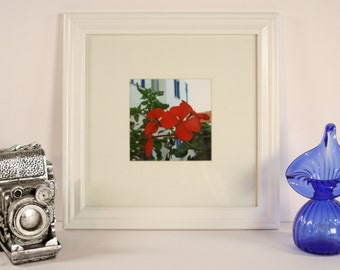 Framed and Matted Photograph Print - Andros Island Garden