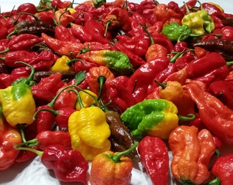 Fresh Super Hot Peppers - Mixed Subscription Box(Pre-Order Shipments Start in July)