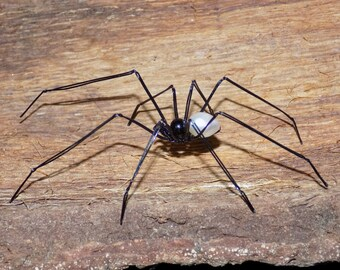 Spider wire, long-legged spider