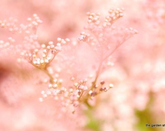 Pink Flowers, Macro Flower Photography, Filipendula, Garden Photography, Digital Download, Dreamy Photography, Do It Yourself - Whisper