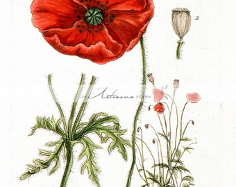 Instant Art Printable Download - Vintage Red Poppy Botanical Flowers Floral - Paper Crafts Scrapbook Altered Art - Vintage Poppies Garden