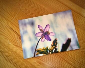 Postcard / / spring / / A6