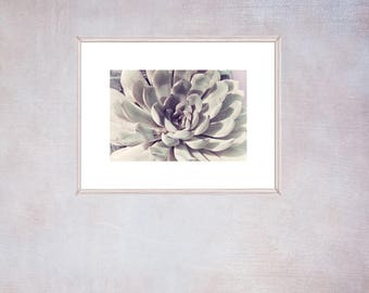 White Succulent Wall Art, French Country Decor, Modern Bedroom Decor, Succulent Print, Gift for Woman