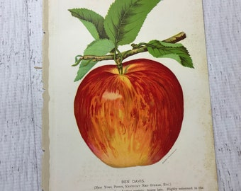 Vintage FRUIT BOOK PLATE with Rich Colors-Vintage Illustration- Actual Page Framable Apple in Red & Green- Stecher Lithograph Co.