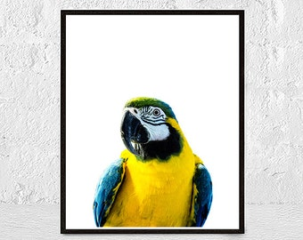 parrot print, bird print, tropical print, parrot wall art, bird wall art, home decor, parrot photo, tropical decor, bird photography, macaw