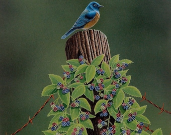 Keeping Watch, bluebird on fence post covered in blackberries