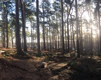Panoramic view of the forest
