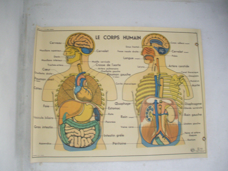 Erfreut Markiertes Diagramm Der Menschlichen Körperorgane ...