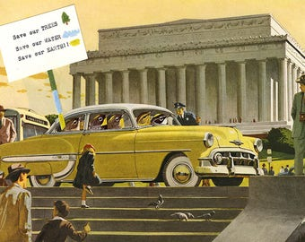 Warblers in Washington. Limited edition print by Vivienne Strauss.