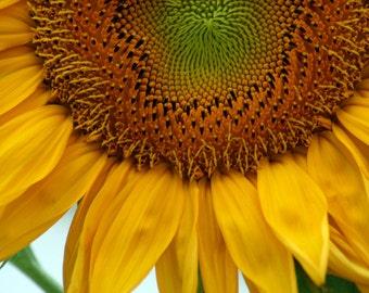 Sunflower Fine Art Photography, Sunflower Photo Print, Home decor, unframed photography, flower photo print