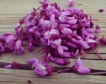 Purple flower petals - Instant Download