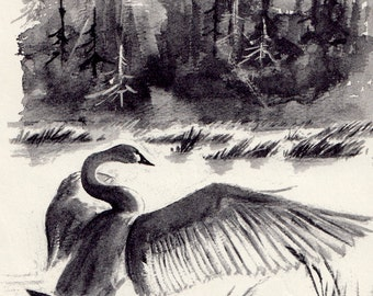 The Trumpet of the Swan by E.B. White, illustrated by Edward Frascino