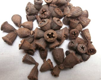 100g Eucalyptus Seed Pods, Conical Gum, Eucalyptus Bell Clusters Dried Natural Acorns, Tropical, Nuts, Bell shape pods