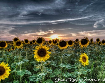 Photo Art - Sunset Photography - Sunflowers