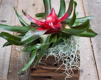 "4'x4'x2.75"" Succulent Planter Box"