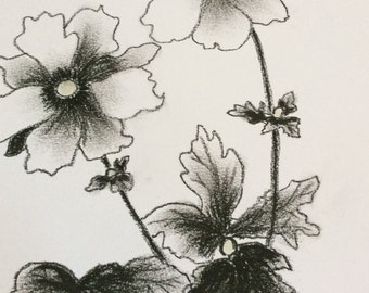 Original charcoal drawing. Japanese windflower drawing.Anemone flower drawing.Original artwork.