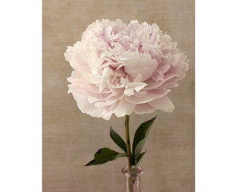 Peony Art,  Vintage Inspired Botanical Print,  Rustic Wall Decor, Pink Peony Print