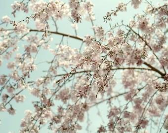 Cherry blossom wall art, white tan mint picture, tree branch photography, nature art print, mint nursery decor, mint wall decor, beige cream