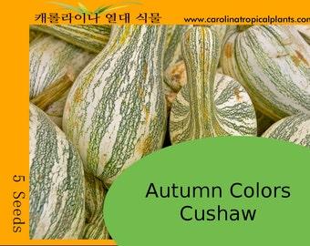 Autumn Colors Cushaw Seeds - 5 seeds