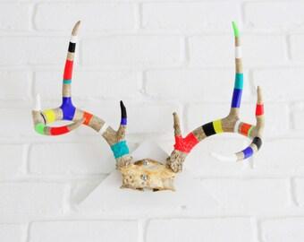 BLACK FRIDAY SALE*** - Painted Antlers Tri Mount - neon jewel