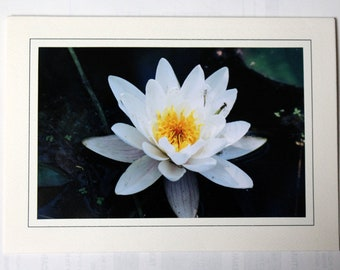 Flower blank greeting cards, photography,  cards, stock cards, flora