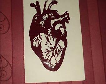 Anatomical Human Heart decal