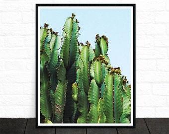 Cactus Print, Desert Photo Printable, Cactus Photo, Succulent, Botanical Wall Art, Green, Cacti, Blue Sky, Midwestern Decor, Printable Art