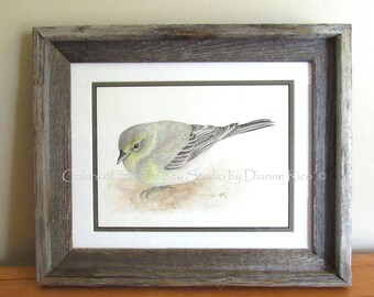 "Winter Pine Warbler - Original Watercolor Songbird Painting with Barn Wood Frame, Double Matted, 13 3/4"" x 16 1/2"""