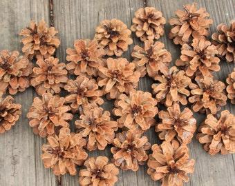 25 Austrian Pine Cones, Natural Pine Cones